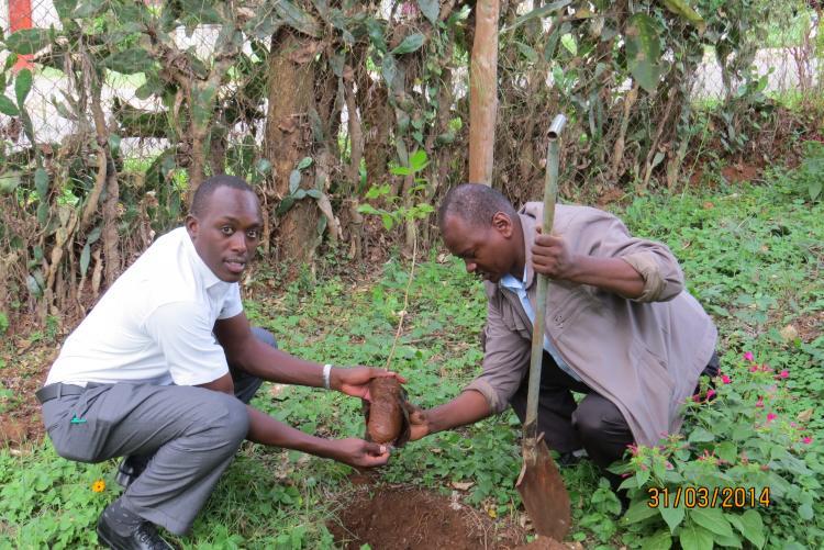 MR MBOGO AND MR KANGETHE PLANTING A TREE SEEDLING AT MAMLAKA STAFF HOUSES