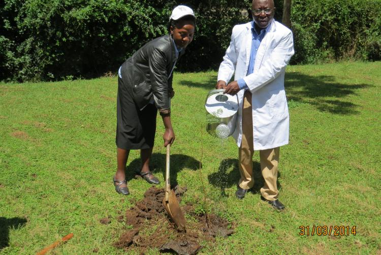 Mr Igiria, Chief Internal Auditor watering a tree seedling planted by the Deputy Chief Internal Auditor